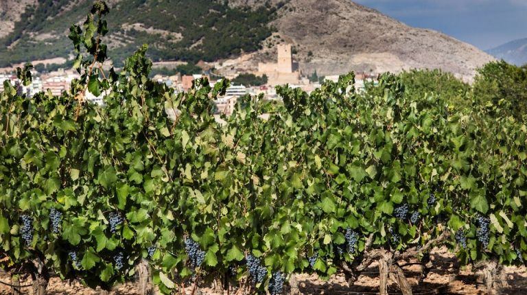 La DOP Vinos Alicante otorga a Villena su distinción de honor