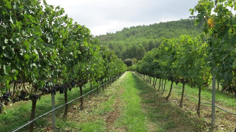 La nueva edición del Concurso de Vinos Artesanales de Benissa abre el plazo de inscripción