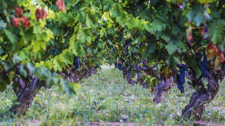Jornada Técnica sobre diseño de viñedos longevos  en Villa-Lucía