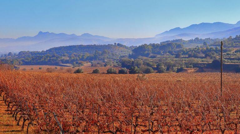 Los vinos de la DO Valencia son reconocidos con 36 sobresalientes por la lista Parker