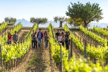 El enoturismo provoca un crecimiento del 20,5% en las Rutas del Vino de España en 2018